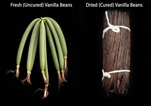 Uncured Vanilla Beans vs. Cured Vanilla Beans