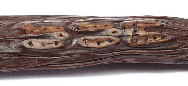 Madagascar Vanilla Bean Tattoo